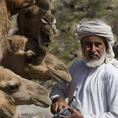Hungry camels - Muscat