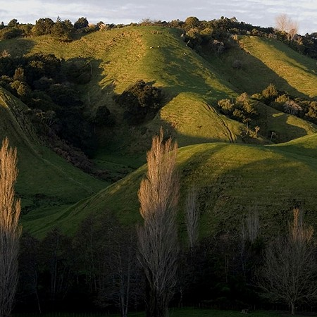 Rolling hills - Ohope, North Island
