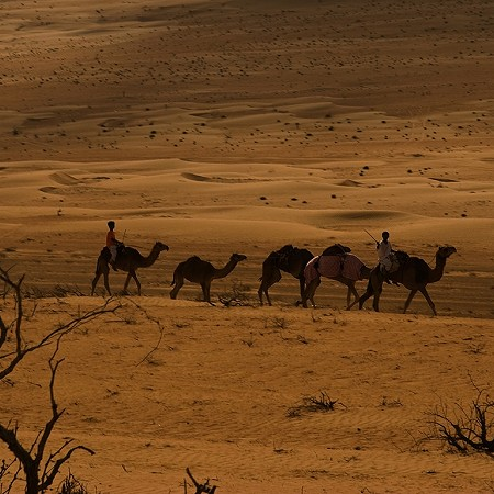 Camel riders - Wahiba Sands