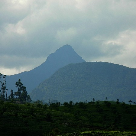 Adam's Peak - 2,243 metres. Known for the sacred footprint (Sri Pada) near the summit.
